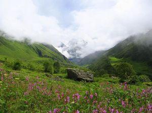 Valley Of Flowers Trek - Himalayas