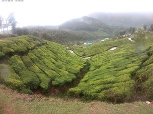 Keep these thing in mind before you set to Munnar to see 'Neelakurinji'
