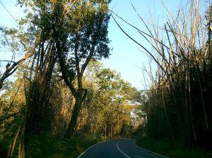 Wayanad Wildlife Sanctuary 1/undefined by Tripoto