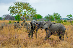 Tanzania - Safaris & beaches