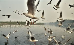 Bird watching is always a fun game... yeahh its true and possible in the polluted city life