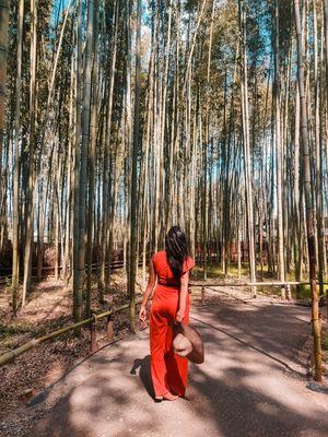 Arashiyama Bamboo Grove - A must visit in Kyoto