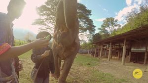 thumbnail of Bobbys Elephant Home - Chiang Mai