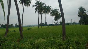Anjaneyadri Hill 1/undefined by Tripoto