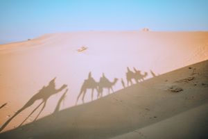 Irresponsible Tourism Is Killing The Thar Desert And It's Time We Take Notice