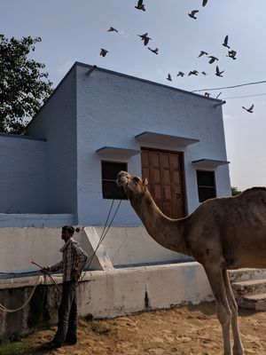 National Research Centre on Camel 1/undefined by Tripoto