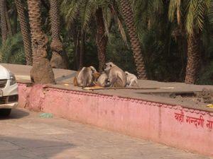 Pandupol Hanuman Ji Mandir 1/1 by Tripoto