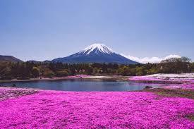 Fuji 1/undefined by Tripoto