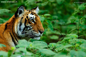 Photography Trip to Corbett - A Wildlife Heaven