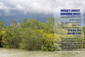 Tigers of Sundarbans