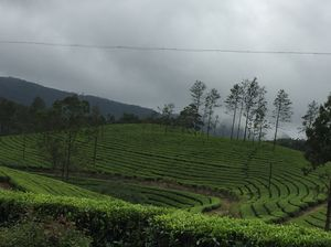 A Road trip to the land of Peace and Tranquility : Munnar