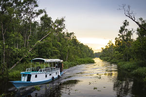 Land Of Pygmy Elephants And Wild Orangutans- Discover The Lost World of Borneo