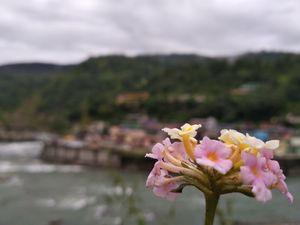 केदारनाथ यात्रा ऋषिकेश से सोनप्रयाग Kedarnath Trip Rishikesh to Sonprayag - यात्री नामा