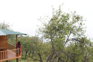 Sojourn to Wood Houses, Vattakanal
