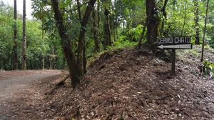 Cerro Chato Trail - through the jungle