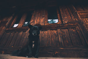 """""""Dogs Of Himachal"""" #BestTravelPictures @tripotocommunity"""