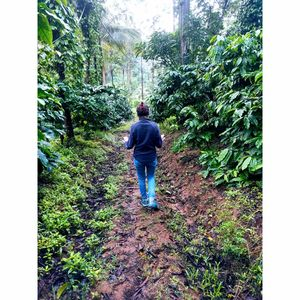 Exploring coffee estates.
