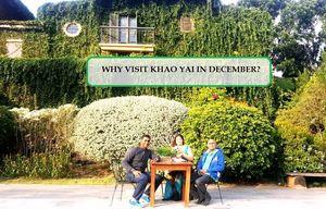 WHY VISIT KHAO YAI IN DECEMBER