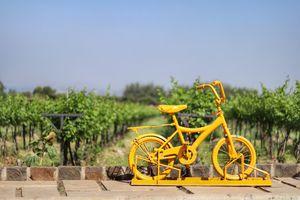 The Vineyard In Mumbai's Backyard