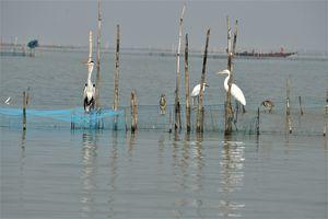 ODISHA- VI: Chilika Lake and The Conference of the Birds
