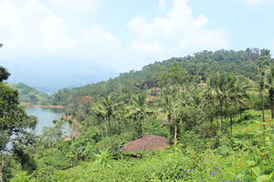 Wayanad - The forests of Kerala
