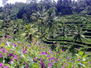 Bangli 1/undefined by Tripoto