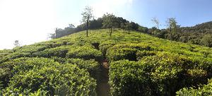 Queen of Hills : Udhagmandalam ~ Ooty