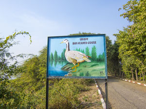 OKHLA BIRD SANCTUARY a place to escape from the busy city life of Delhi