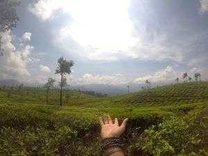 Let's thank these tea gardens to offer us our life saviour - Chai ☕️ ☺️