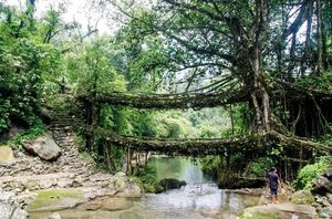 Living Root Bridges in Meghalaya