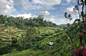 Bali - Bird park , Kintamani, Bali sing