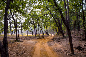 Five things to do in Bandhavgarh National Park