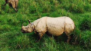 Jungle Safari in Kaziranga-the land of Rhinos and an encounter with the Royal Bengal Tiger.