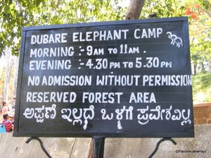 Connect with Elephants in the Dubare Elephant Club