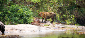 Parambikulam Tiger Reserve 1/undefined by Tripoto