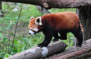 Zoological Park Gantok Sikkim 1/1 by Tripoto