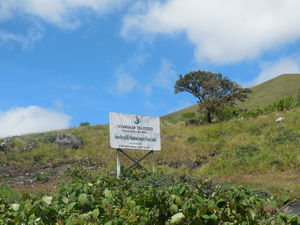 Rajamalai (Eravikulam) National Park 1/undefined by Tripoto
