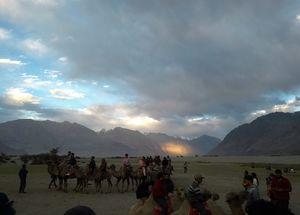 Cruising on a Double Hump Camel and watching a beautiful sunset at Nubra Valley #desertsafari