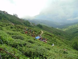My trip to The Queen of Hills - Darjeeling