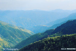 Solan-sadhupul-chail-kufri-shimla Round Road Trip For A Good Day