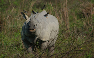 All You Need To Know About The Kaziranga National Park