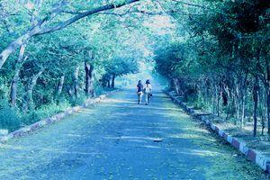 Okhla Bird Sanctuary - Hidden at border of Delhi/Noida
