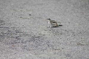 Sultanpur Bird Sanctury - Hidden sanctury near Gurgaon