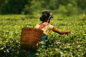 Dibrugarh: India's Original Tea City