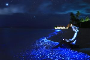The Magical Sea Of Stars In Maldives Will Transport You To Fairytale