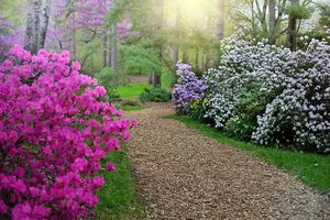 Where to see the beautiful rhododendrons bloom this spring season
