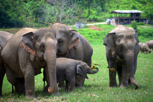 Thailand Opens an Observation-Only, Truly Elephant-Friendly Camp