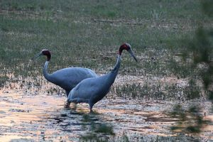 Bird watching trek in Keoladeo bird sanctuary, Bharatpur, Rajasthan