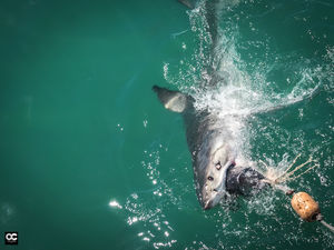 Shark Diving Cape Town South Africa - Travel Like We Do