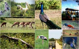 Yala National Park Information Centre 1/undefined by Tripoto